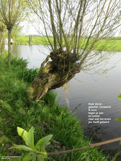 1 de boom met gedicht - Missie en Mijmeringen