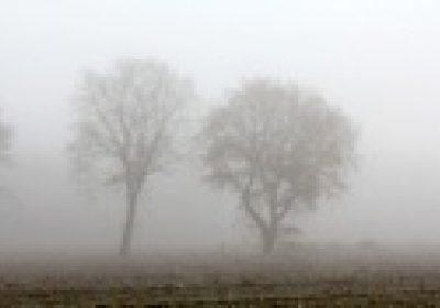 Lees meer over Mist van Anja de Jong